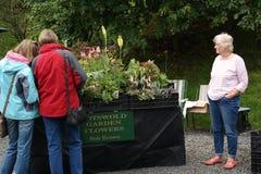 Señora que vende las plantas Imágenes de archivo libres de regalías