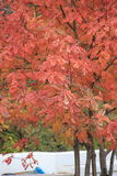 Señora In Red Imagen de archivo libre de regalías