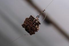 Señuelo del alimentador de la pesca con el groundbait Fotografía de archivo