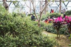 Seúl, Corea del Sur - 4 de febrero de 2019: dentro de la vista del invernadero del parque botánico de Seúl, Seul, Corea del Sur fotos de archivo libres de regalías
