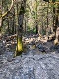 Se över en flod in i skogen arkivfoton