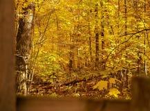 Se över ett staket på gula sidor i höst nära Hinckley minnesota fotografering för bildbyråer