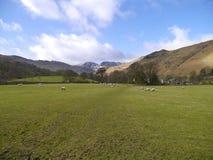 Se över fält av får till berg fotografering för bildbyråer