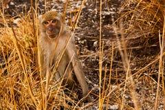 se apaprärien yellow fortfarande Arkivfoto