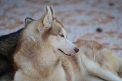 Se atrapa el perro lindo Imágenes de archivo libres de regalías