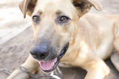 Se av ung hund på solig dag Arkivfoton