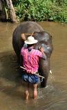 Se baigner d'éléphant Images libres de droits