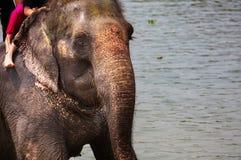 Se baigner d'éléphant Images stock
