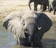 Se baigner d'éléphant Image libre de droits