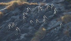 Se baigner de Sun Images libres de droits