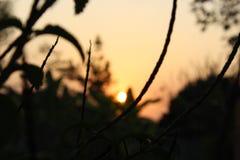Se bak sidorna av en växt för att se soluppsättningen royaltyfri fotografi