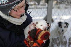 Caresse vers le haut avec un chiot de chien de traîneau sibérien image stock