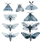 Se blue night moth, indigo butterfly watercolor vintage illustration, hand drawing,