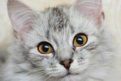 Se in camera katten Arkivbild