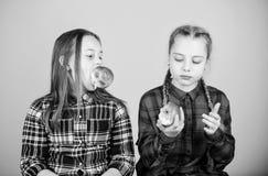 Se concentrer sur suivre un r?gime et manger saine Petits enfants mangeant des pommes le jour suivant un r?gime Petite fille mign image stock