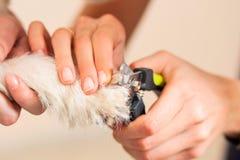 Se cortan las garras del perro Fotos de archivo libres de regalías