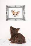 Se coucher vu par chien mignon de chiwawa au fond dans un salon Photos stock