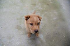 Se den skarpa hunden Fotografering för Bildbyråer