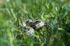 se den små ormen royaltyfria bilder