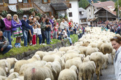 Se Desmonteghea. Falcade, Belluno, Italy - September 26, 2015: Se Desmonteghea a great party in Falcade for the livestock returning from the highland pastures Royalty Free Stock Photo