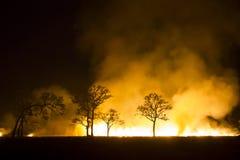 Se destruye el ecosistema ardiente del bosque del incendio fuera de control Fotos de archivo libres de regalías