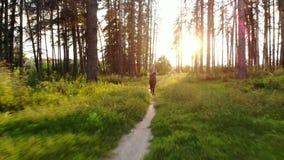 Se divierte a la mujer que corre en bosque a lo largo del rastro metrajes