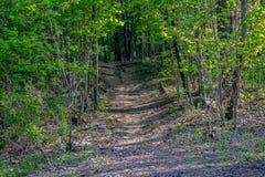 Se en bana som leder in i en skog upp en kulle i vår arkivfoton