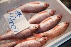 Se están embalando los pescados coloreados rojo Imagen de archivo libre de regalías
