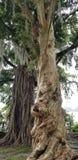 Se estas árvores poderiam falar imagens de stock