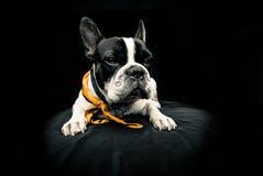 se för arroundhund arkivbild