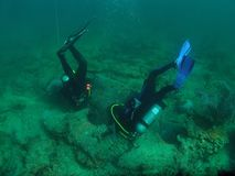 se för dykarehummer Arkivfoton