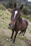 se för häst Arkivfoto
