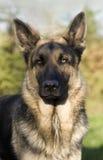 se för hund Royaltyfria Bilder