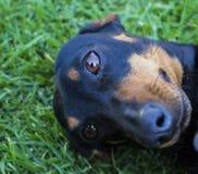 se för kamerahund arkivfoton