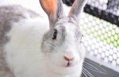 Se för kanin Royaltyfri Bild