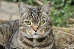 se för katt Arkivfoton