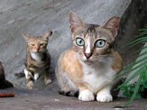 se för katt royaltyfria foton