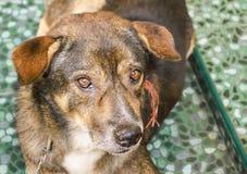 Se för närbildhundöga Royaltyfri Fotografi