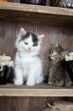 Se för två kattungar Fotografering för Bildbyråer