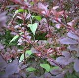 Se fast en blommande Bush i trädgården Royaltyfria Foton