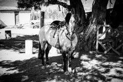 Se hästen arkivbild