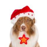 Se hunden med stjärnan för jultomten hatt och jul Arkivfoto