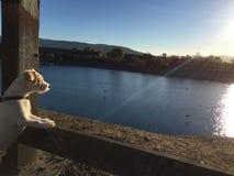 Se in i horisonten Royaltyfri Fotografi