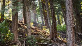 Se in i skogen royaltyfria foton