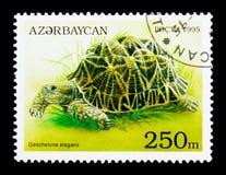 Se indiano della tartaruga (elegans del testudo), delle tartarughe e delle tartarughe della stella Fotografia Stock Libera da Diritti