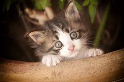 Süße Katze Lizenzfreies Stockbild