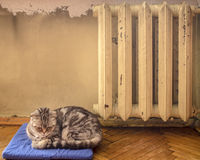 Süße Katze schlafend auf einem blauen Kissen und nahe der heißen Batterie erhitzt Stockbild