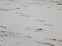 Se krabban Royaltyfri Bild