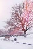 Se mina andra arbeten i portfölj Vinterpark som räknas med snow BänkFN Arkivfoton