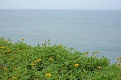 Se in mot havet från den Varkala klippan Royaltyfria Bilder